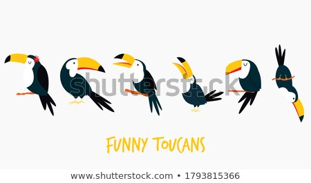 Toucan birds in different actions Stock photo © bluering