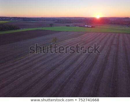 Lonely tree in cultivated field in sunset, drone pov Stock photo © stevanovicigor