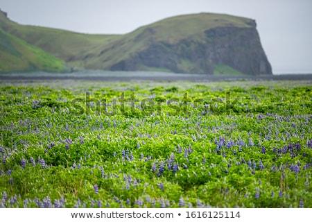Flores prado paisagem montanha localização Foto stock © Kotenko