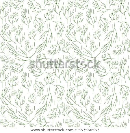травы бесконечный текстуры растительное фон Сток-фото © lucia_fox