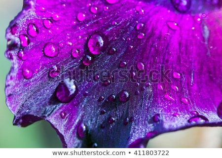 Perfume gotas vidro publicidade água Foto stock © Olena