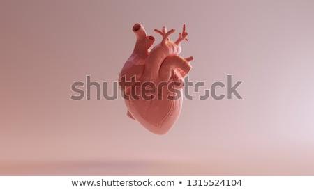 3D medici illustrazione umani cuore Foto d'archivio © maya2008