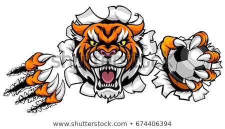 Tiger Holding Soccer Ball Mascot Stock photo © Krisdog