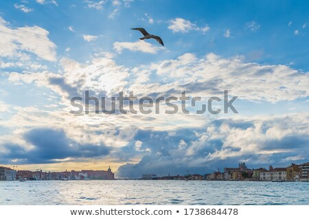 Seagull over Grand Canal Stock photo © Givaga