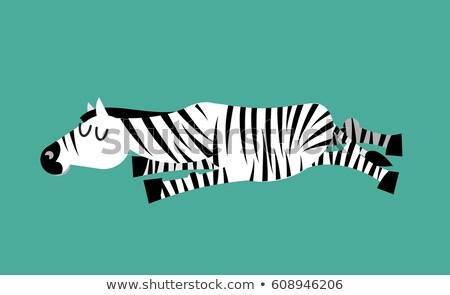 Sleeping zebra. Animal sleeps. Sleepy wild beast Stock photo © popaukropa