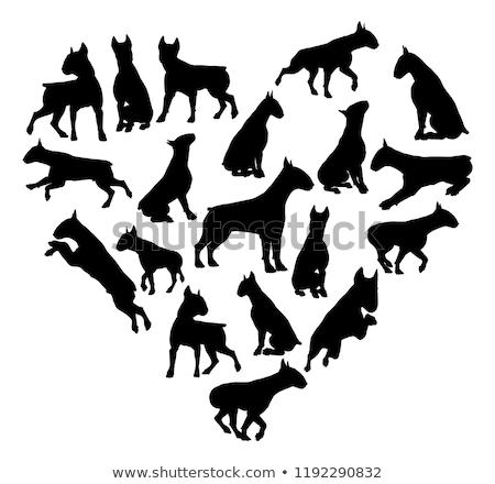 bull terrier dog heart silhouette concept Сток-фото © krisdog