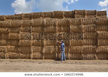 farmer inspecting bale of straw in field stock photo © simazoran