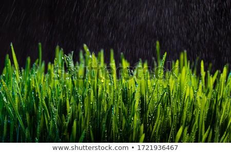 Rivier scène regen vallen illustratie hemel Stockfoto © colematt
