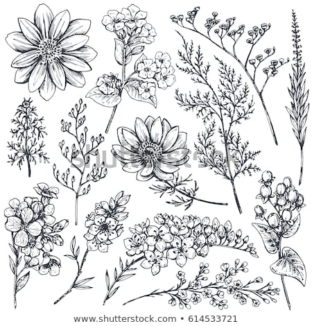 Set of flora branches. Hand drawn vector Vintage floral. Sketch ink illustration. leaves, flowers an stock photo © bonnie_cocos