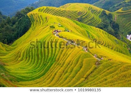 Riz paysage Chine alimentaire fond montagne Photo stock © Juhku
