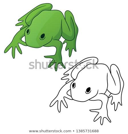 Kikker beide vol kleur groene zwarte Stockfoto © jeff_hobrath
