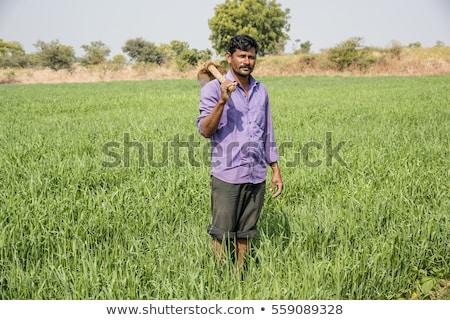 ストックフォト: 農家 · 麦畑 · お金 · 手 · ドル