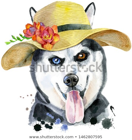 Stock photo: Watercolor portrait of husky with summer hat with freesia