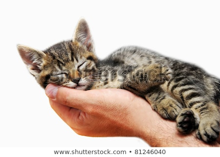 Gatinho adormecido brasão pequeno bebê gato Foto stock © simply