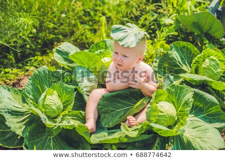 A baby sitting among the cabbage. Children are found in cabbage Stock photo © galitskaya