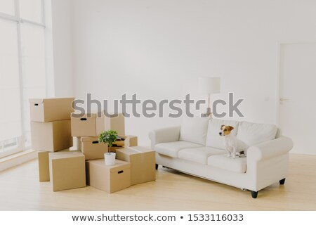Photo of small dog on comfortable sofa poses in spacious living room, family personal belongings in  Stock photo © vkstudio