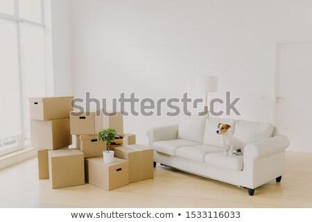 Foto comfortabel sofa ruim woonkamer Stockfoto © vkstudio