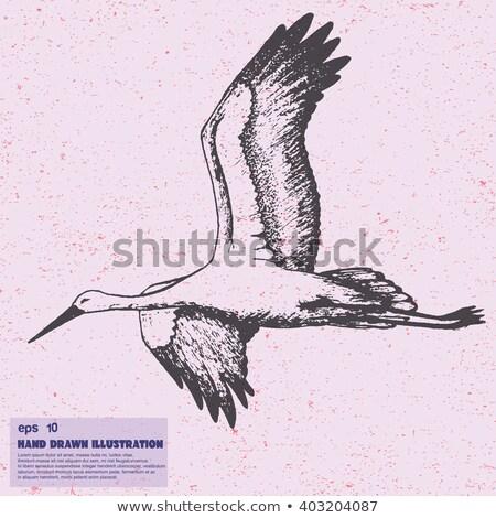 Hand gezeichnet Illustration weiß Storch Jahrgang Skizze Stock foto © Artspace