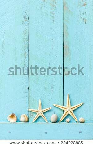 border frame summer beach shell blank copy space stock photo © lunamarina