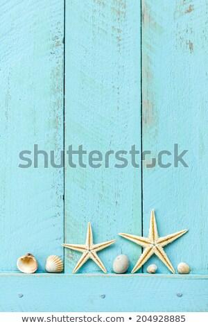 border frame summer beach shell blank copy space stock photo © lunamarina