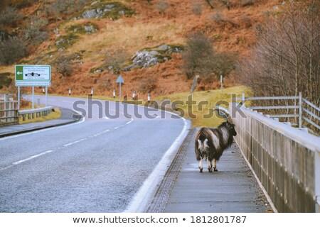Hoogland Schotland landschap stilte natuurlijke buitenshuis Stockfoto © phbcz