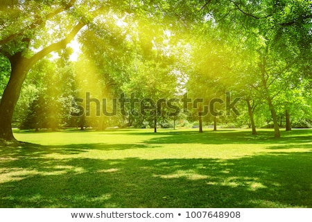 Summer In The Park With Green Trees And Grass Stockfoto © Serg64