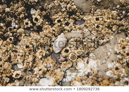 岩 良い テクスチャ 自然 抽象的な 海 ストックフォト © jaykayl