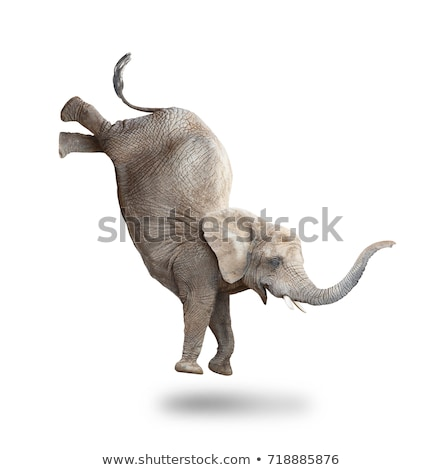 Stock photo: Jumping Elephant