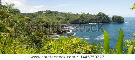 tropical ocean with flowers and green fresh grass and lava rocks stock photo © iriana88w