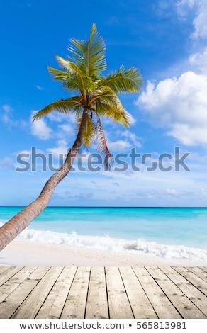 Kókusz fa növekvő üres trópusi tengerpart mag Stock fotó © KonArt