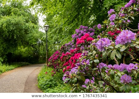 Beautiful Spring garden with red azalea and cobblestones path  Stock photo © Julietphotography