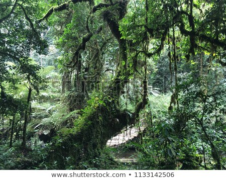 rain forest vegetation in the Bwindi Impenetrable National Park Stock photo © prill