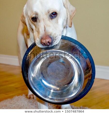 kutya · vacsora · idő · eszik · francia · bulldog - stock fotó © willeecole