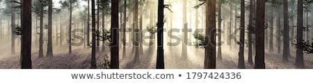 Sonbahar sabah çayır ağaç Stok fotoğraf © Heru