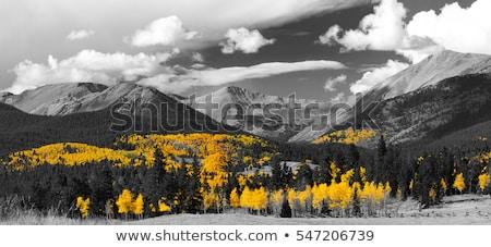 Brzozowy drzewo kolory jesieni niebo biały parku Zdjęcia stock © wildnerdpix