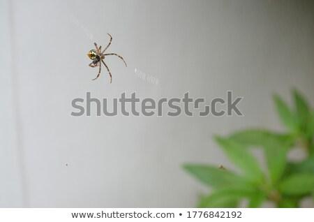 Stock fotó: Kert · pók · állat · makró · közelkép