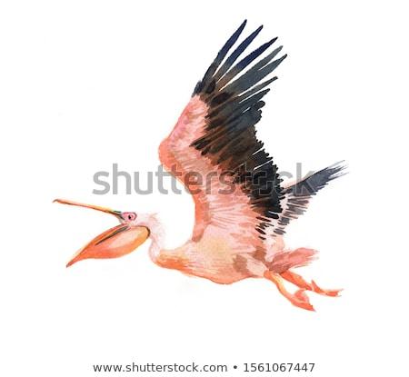 flying pelican stock photo © jkraft5