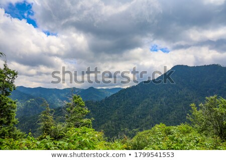 cloudy sky over the green forest Stock photo © azjoma