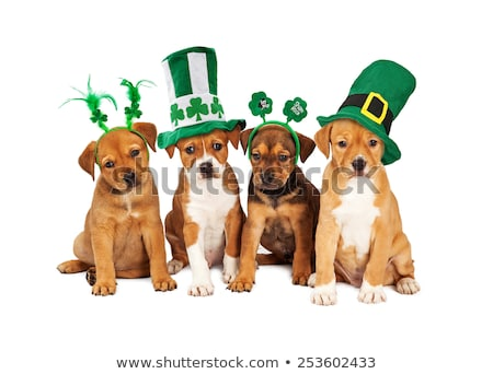St Patricks Day Hund cute Welpen up grünen Stock foto © willeecole