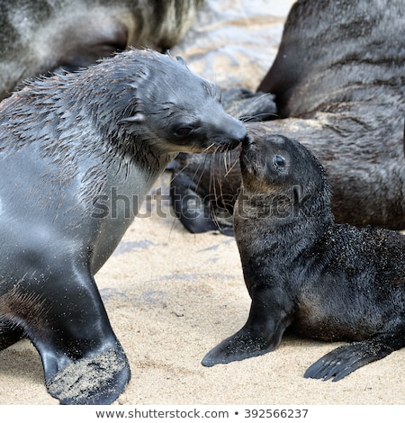 baby sea lion with mother stock photo © pxhidalgo