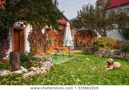 Beautiful autumn leaves on house wall Stock photo © Nejron