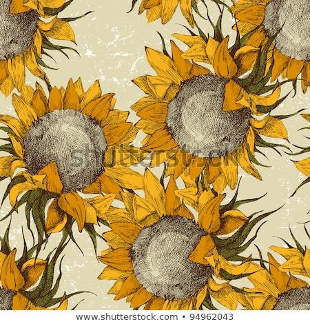 Sketch Sunflower Vector Vintage Seamless Pattern Stock photo © mart