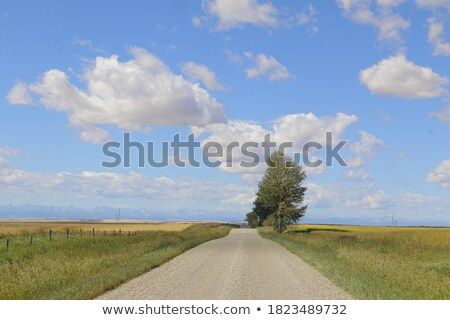 Tranquil rural scene with road between two fields. Stock photo © dariazu