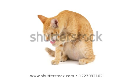 Cute Orange Kitten Bathing on White Background Stock photo © gabes1976