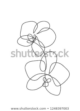 Foto d'archivio: Mano · disegno · orchidea · fiore · eps · 10