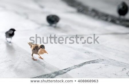 feral pigeon eating bread Stock photo © taviphoto