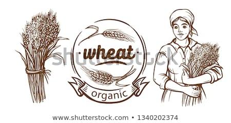 Zdjęcia stock: Kobieta · pszenicy · kłosie · ilustracja · wektora