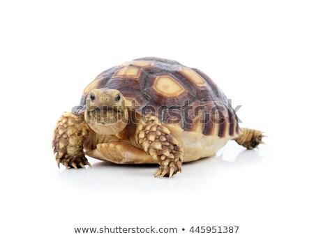 reus · schildpad · gevangenis · eiland · natuur · benen - stockfoto © ultrapro