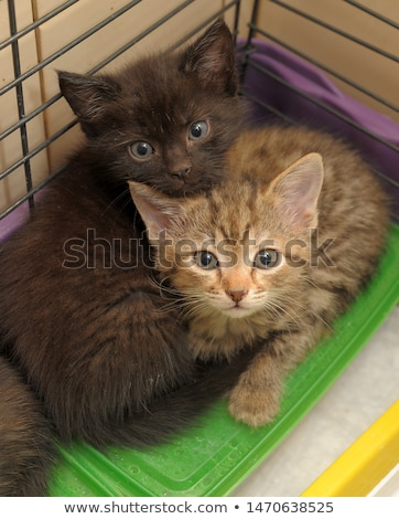 Chaton cage sans-abri animaux regarder Photo stock © suemack
