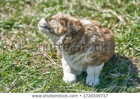Filhotes de cachorro recém-nascido potável leite família rua Foto stock © chris2766
